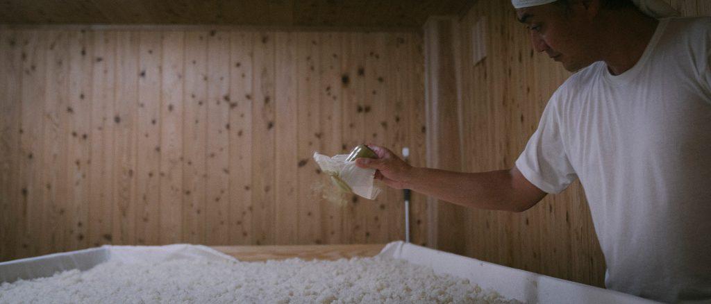 麹室での麹の種付け