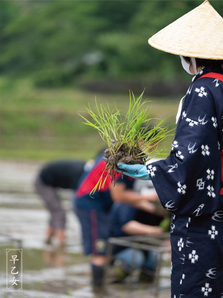 農耕儀礼『早苗饗祭』(さなぶりさい)